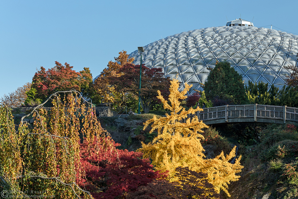 Fall leaf colors provided by Gingko and Maple trees near the bridge and Bloedel Conservatory in Queen Elizabeth Park, Vancouver, British Columbia, Canada. Photographed from the Quarry Gardens at QE Park.