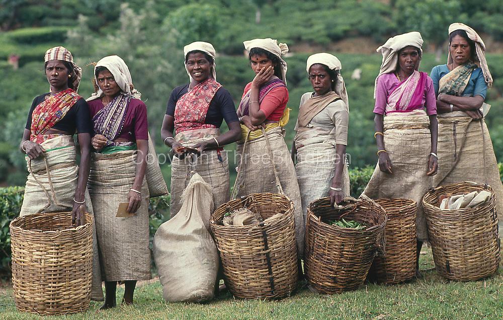Sri Lanka. Tea Pluckers with their baskets. 1989