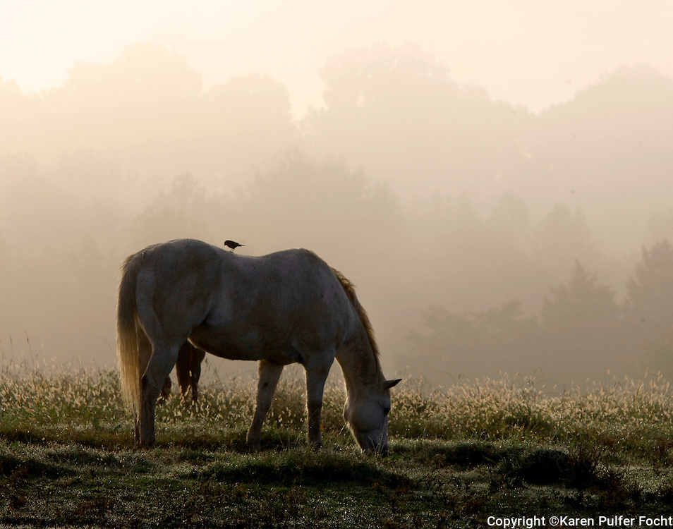 Horses at Shelby Farms, Memphis, Tennesseeone of the largest urban parks in America.