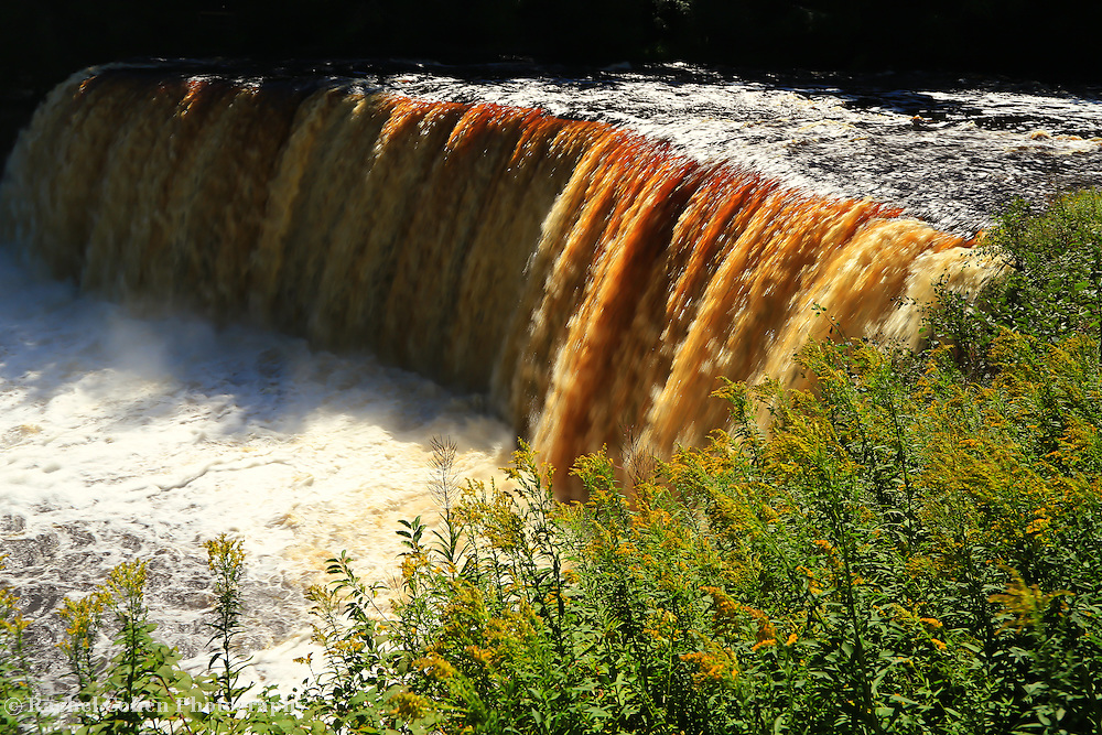 &quot;Flowers of Tahquamenon&quot;<br />