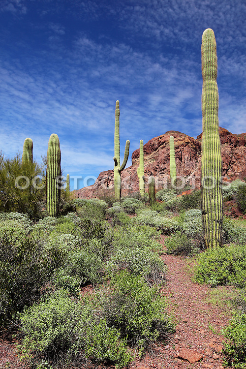 Organ Pipe Cactus National Monument Park