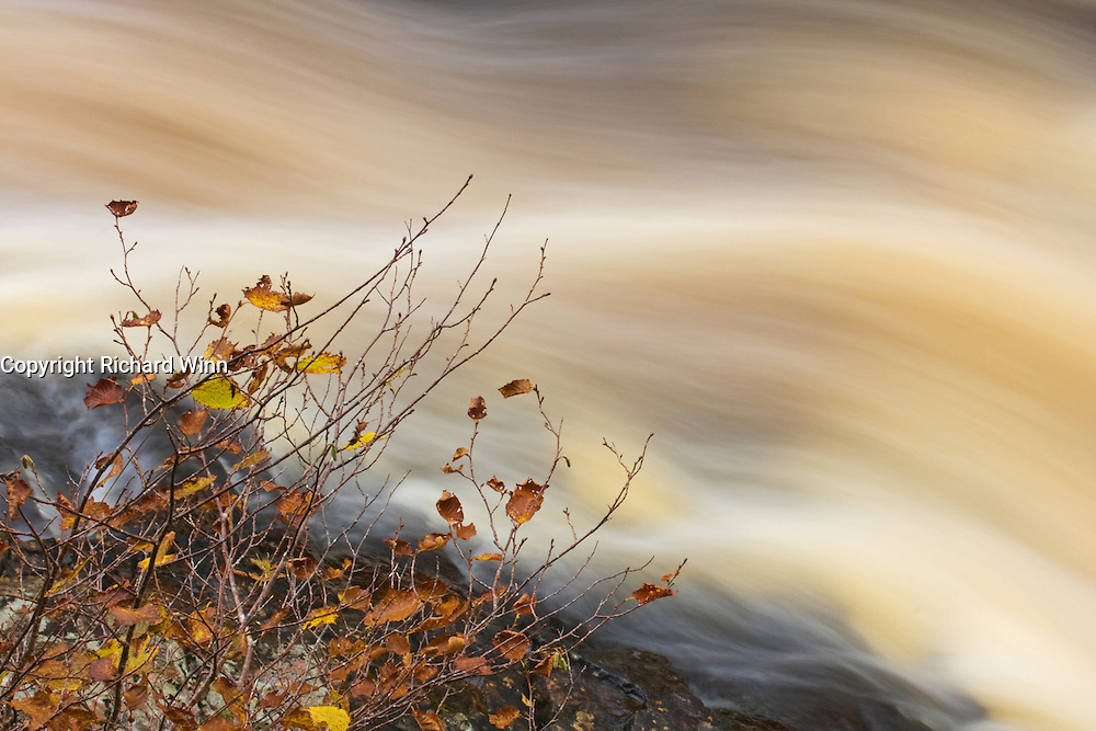 Long exposure of the Falls of Shin in the Scottish highlands, a common salmon leap.