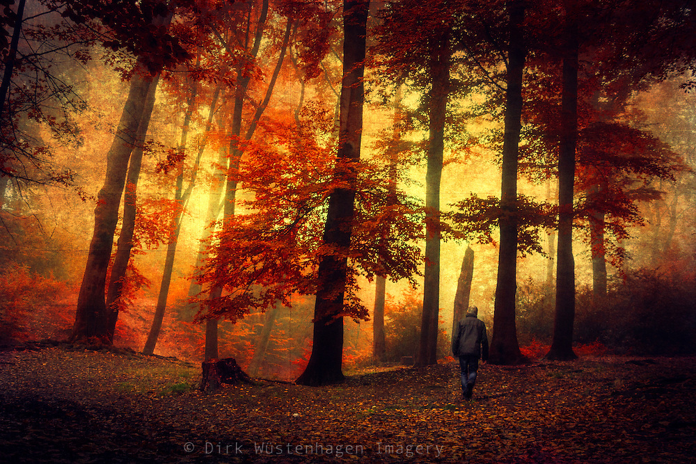 Dreamy forest scenery - texturized photograph<br /> Prints -
