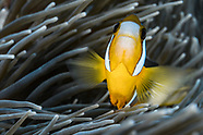 Indian ocean underwater - Bali - Indonesia