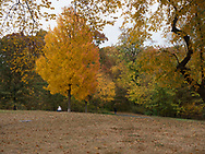 Autumn colors at The Great Hill in Central Park, New York City