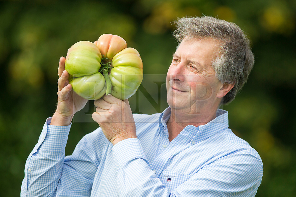 © Licensed to London News Pictures. 15/09/2017. Harrogate UK. Gareth Griffin with his prize winning tomato at the Giant Vegetable competition at this years Harrogate Autumn Flower Show in Yorkshire. Photo Credit: Andrew McCaren/LNP