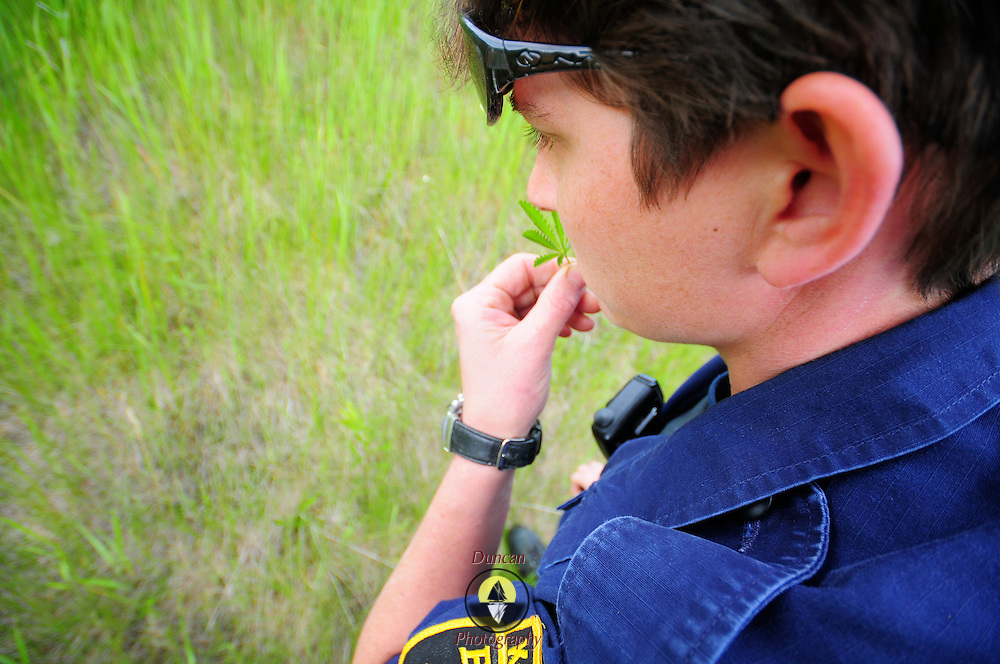 6/1/09 Bath Police patrol and Canine Officer Michelle Small sniffs a plant in a field while seeking a plot of marijuana plants.  Photo by Roger S. Duncan