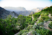 Ancient terraces on the sides of the mountain are used to cultivate Roses, pomegranates along with other fruits.