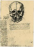 Leonardo da Vinci (1452-1519) Italian painter, sculptor, engineer, architect. Anatomical study of a skull
