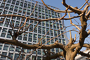 Urban tree growing beneath the modern architecture of a city headquarters.