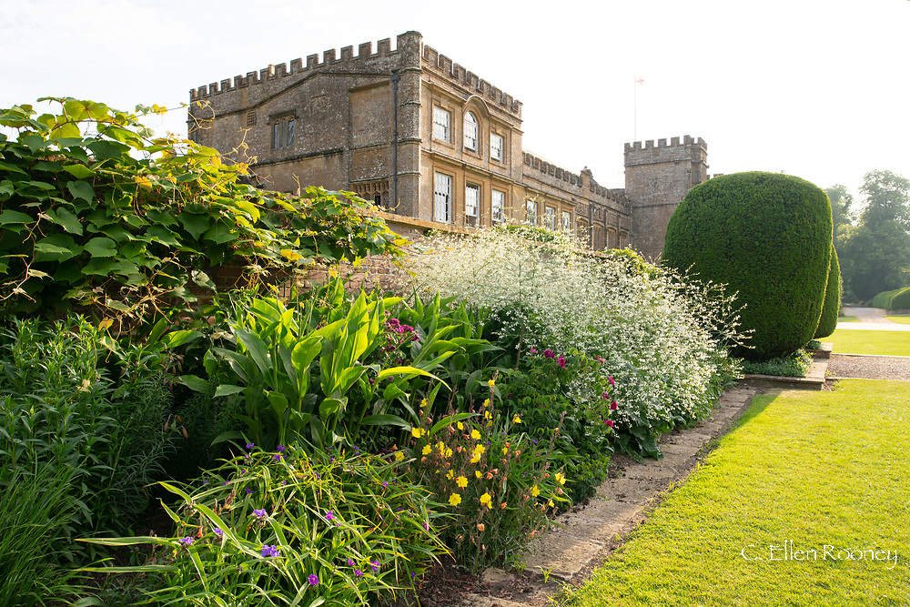 Clipped Yew and a herbaceous border at Forde Abbey, Chard, Dorset, UK