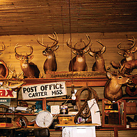 Part commerce and part museum with its odd assortment of all things Delta, Jordan's store was the center of the world in the town of Carter. Mounted deer with impressive antlers, a fox on point, a stalking bobcat and other wild life bear witness to a love of hunting. My favorite item is the mule collar. I like to imagine that it's been there since a note was written on the wall marking the level of flood waters in 1927. High water invaded the store again in 2011, when the Yazoo River overflowed for miles. By 2013, this original structure was still standing but unsafe to enter, and the Jordan store had moved next door.