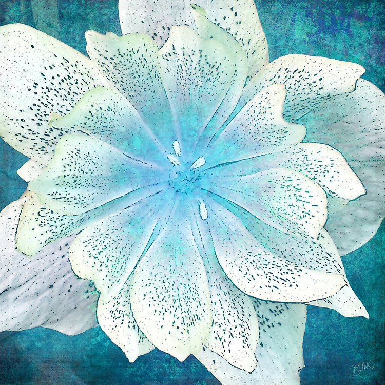 Interplay of a turquoise blue background with delicate Lenten rose petals creates a jewel toned center