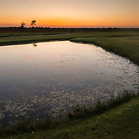 Golfer course Flommen Golfklubb, frog environment, shallow pond at dusk<br /> Location: Flommen, Skan&ouml;r, Sweden