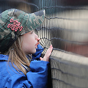 NEW YORK, NEW YORK - MAY 04:  A young fan watching the game through the safety net during the Atlanta Braves Vs New York Mets MLB regular season game at Citi Field on May 04, 2016 in New York City. (Photo by Tim Clayton/Corbis via Getty Images)
