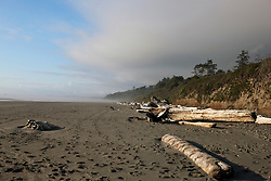 Timbers washed ashore on a beach, Olympic National Park, Washington, United States of America