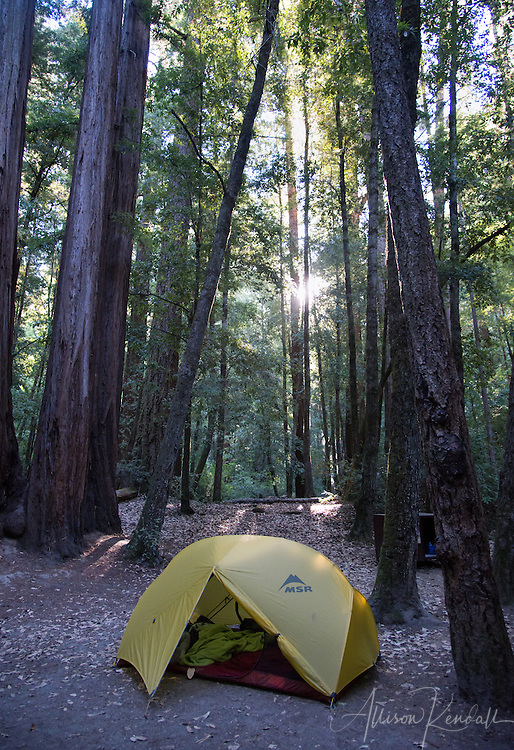 Big Basin Redwoods State Park in the forested mountains above Santa Cruz is a beautiful California location for hiking, camping, sightseeing, and exploring.