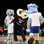 Bruno the Bighorn is joined on court by University of Nevada, Reno's Wolfie Half and The Reno 1868's Truckee during a quarter break of the NBA G-League Basketball game between the Reno Bighorns and the Raptors 905 at the Reno Events Center in Reno, Nevada.