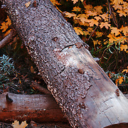 Log surrounded by Fall leaves - Oak Creek Canyon, AZ