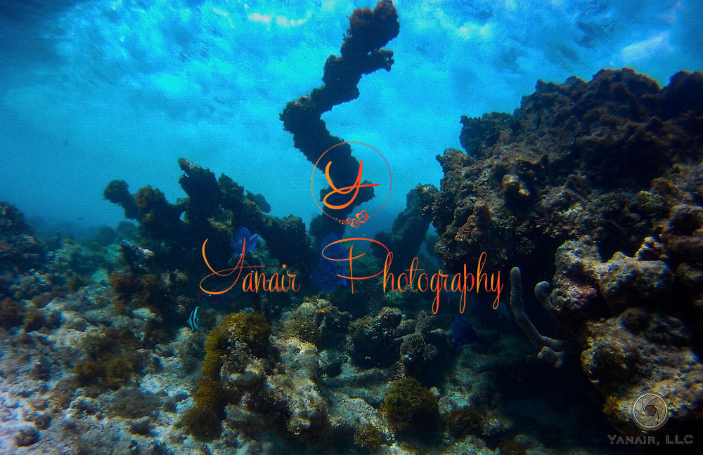 Underwater activities in St. Croix USVI Please select Shopping Cart Below to Purchase prints and gallery-wrapped canvases, magnets, t-shirts and other accessories