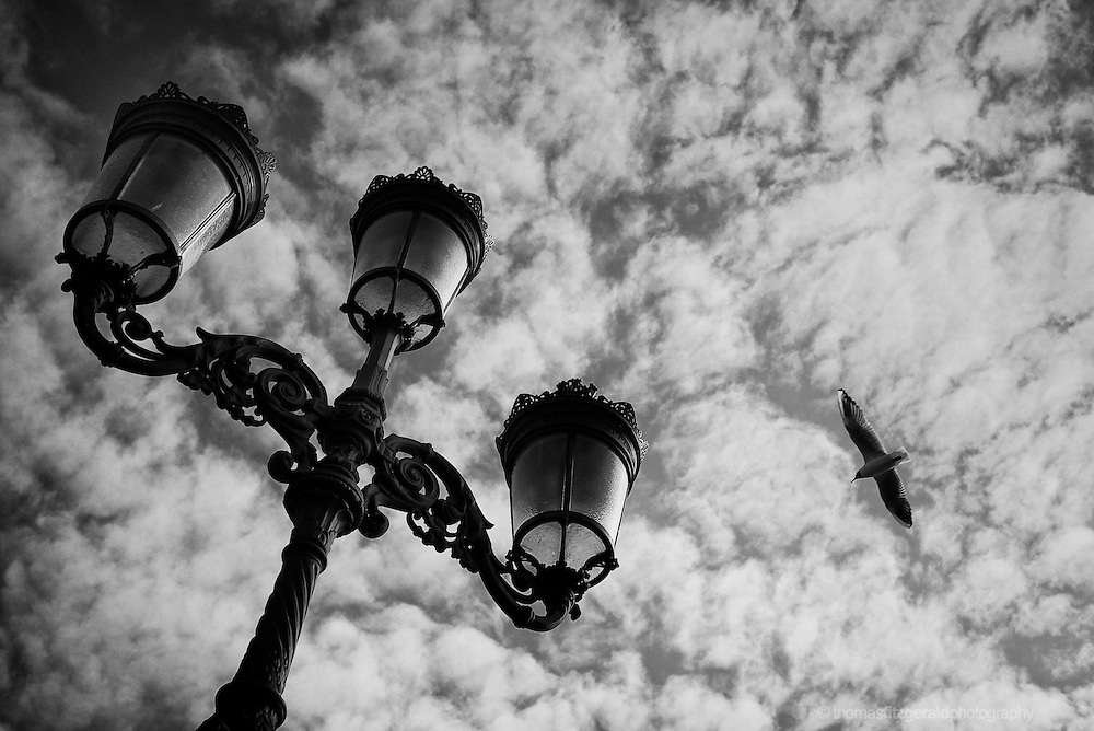 A black and white image of one of Dublin's iconic lamp posts, with the viewer looking up at the sky as a bird flies overhead