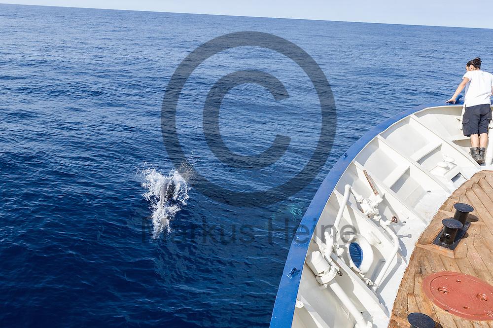 Delfine begleiten am 18.09.2016 das Fluechtlingsrettungsboot Sea-Watch 2 vor der  maltekischen Kueste. Foto: Markus Heine / heineimaging<br /> <br /> ------------------------------<br /> <br /> Veroeffentlichung nur mit Fotografennennung, sowie gegen Honorar und Belegexemplar.<br /> <br /> Publication only with photographers nomination and against payment and specimen copy.<br /> <br /> Bankverbindung:<br /> IBAN: DE65660908000004437497<br /> BIC CODE: GENODE61BBB<br /> Badische Beamten Bank Karlsruhe<br /> <br /> USt-IdNr: DE291853306<br /> <br /> Please note:<br /> All rights reserved! Don't publish without copyright!<br /> <br /> Stand: 09.2016<br /> <br /> ------------------------------