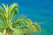Coconut palm and blue Pacific water, Island of Kauai, Hawaii