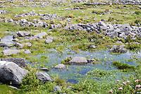 Flooded field on Inis Oirr Island the Aran Islands County Galway Ireland