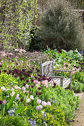 Wooden bench with border of tulips at Parham including Tulipa 'Groenland', 'Shirley', Queen of Night', 'Purple Dream', 'Spring Green' and bluebells