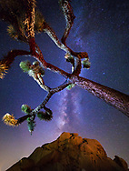 August 27, 2016 - The Milky Way from under a Joshua Tree at Hidden Valley Campground in Joshua Tree National Park in Joshua Tree, CA.