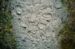 Footprints on the Hummocks Trail, Mt. St. Helens National Volcanic Monument, Washington, US
