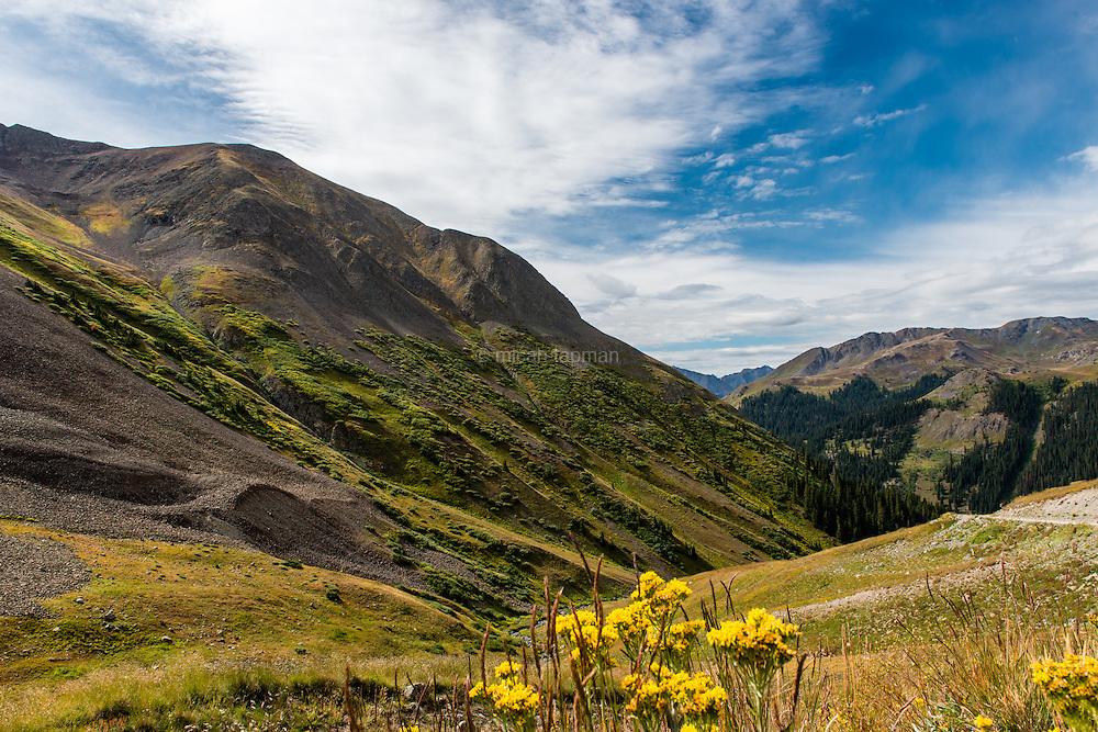 Wildflowers blooming near Cinnamon Pass on the Alpine Loop in southwestern Colorado.
