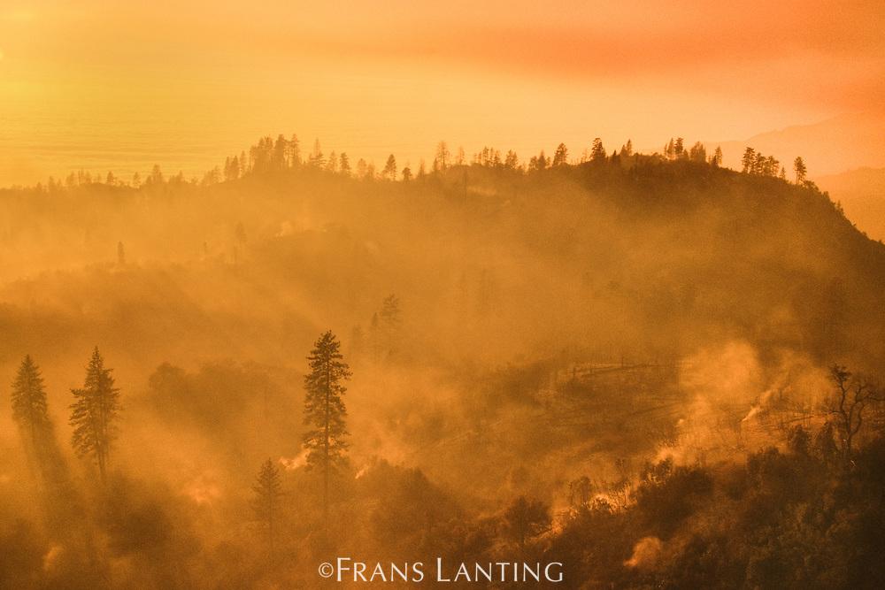 Burned landscape after forest fire (aerial), Big Sur, California