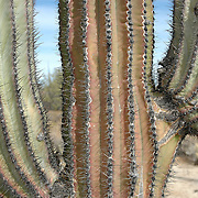 Scenes from a week-long camping trip through Northern Baja Mexico in February 2006.