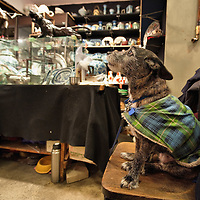 LONDON, ENGLAND - JANUARY 16:  A dog sits on the chair of its owner stall inside the Roger's Gallery in Portobello Road on January 16, 2010 in London, England. Portobello traders fear for the Market's future after Lipka's Antiques Arcade, where more than 150 traders had their stalls, was redeveloped to accommodate a large High street chain store.  (Photo by Marco Secchi/Getty Images)