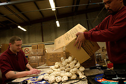 UK ENGLAND NOTTINGHAM 14DEC04 - Two unidentified inmates unpack a box of dog treats in a workshop at HMP Lowdham Grange in Nottinghamshire. This newly-built prison is entirely run and controlled by private company Premier-Serco on contract from the Home Office since 1998. The facility holds over 500 Category-B and C inmates with an minimum sentence of 4 years.....jre/Photo by Jiri Rezac....© Jiri Rezac 2004....Contact: +44 (0) 7050 110 417..Mobile:  +44 (0) 7801 337 683..Office:  +44 (0) 20 8968 9635....Email:   jiri@jirirezac.com..Web:     www.jirirezac.com....© All images Jiri Rezac 2004 - All rights reserved.