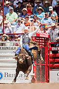Bull rider Tyler Smith holds on to Hey Buds at the Cheyenne Frontier Days rodeo at Frontier Park Arena July 24, 2015 in Cheyenne, Wyoming. Frontier Days celebrates the cowboy traditions of the west with a rodeo, parade and fair.
