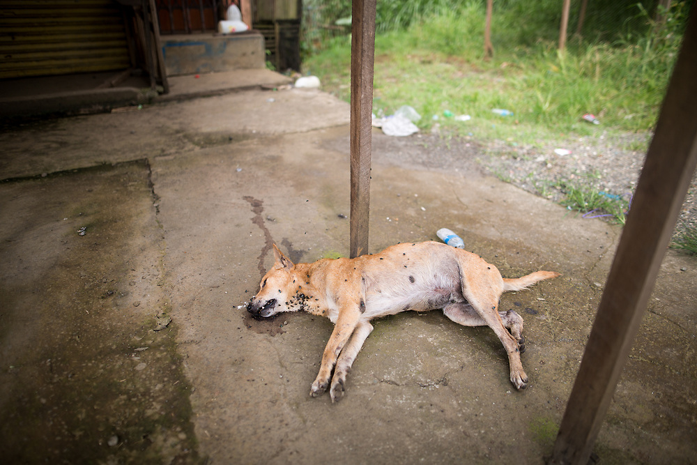 MARAWI, PHILIPPINES - JUNE 8: A dead dog in front of a abandoned house is seen on the third week after an attack of Maute group in Marawi City, Lanao del Sur, Southern Philippines, June 8, 2017. Residents left the village (Photo: Richard Atrero de Guzman/NUR Photo)