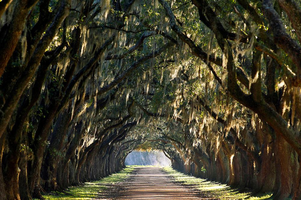 Oak Alley Edgard Louisiana