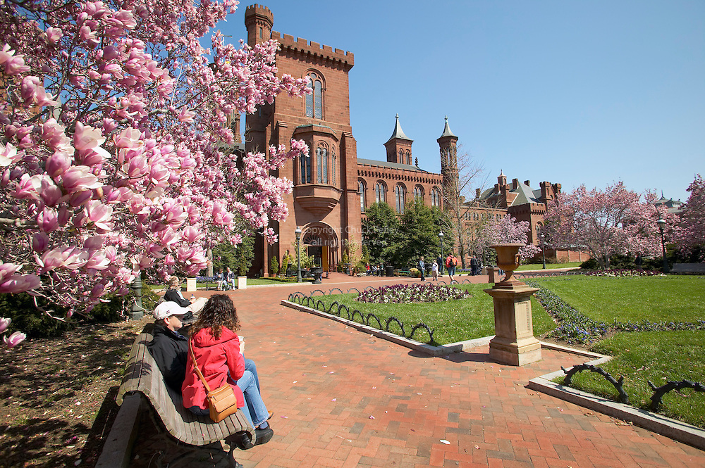 People sit on bench under Magnolia tree in bloom in Haupt Garden courtyard at the Smithsonian Castle and Information Center, Washington DC USA<br />