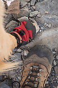 Dog and hiker prepare to hit the trail, Inyo National Forest, California