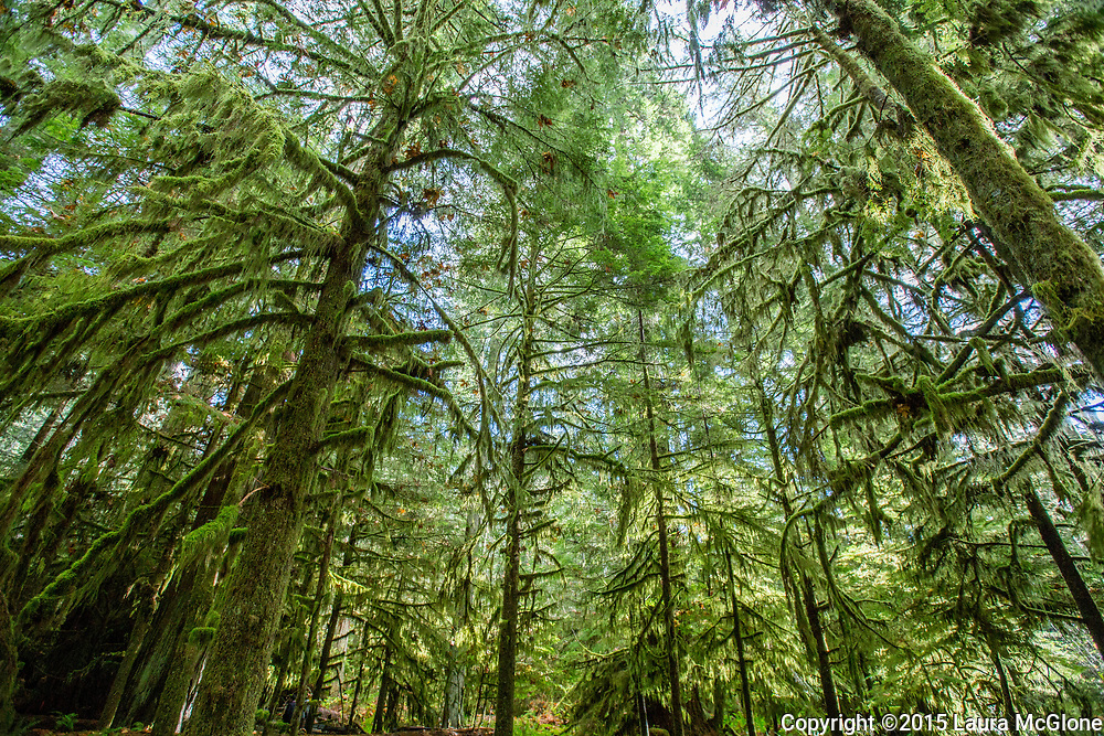 Pacific Temperate Rainforest, Vancouver Island, British Columbia, Canada