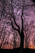 A tree with thick twisting branches stands out in front of the pack under a deep and starry West Virginian sky.