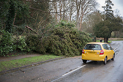 © Licensed to London News Pictures. 28/03/2016. Leatherhead, UK. A car drives round a fallen tree as storm Katie hits the south east. Photo credit: Peter Macdiarmid/LNP