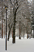 The Coeur D Alene city park after a winter snowfall. PLEASE CONTACT US FOR DIGITAL DOWNLOAD AND PRICING.