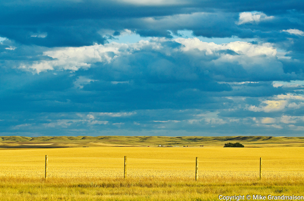 farmland <br /> north of Grasslands National Park<br /> Saskatchewan<br /> Canada