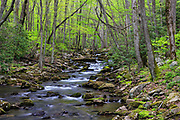 Little Stoney Creek, located along the hiking trail to the Cascades waterfall in Giles County, Virginia