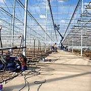"""Nederland Maasland 27 september 2007 .Aanleg nieuw type kas, extra hoge nieuwbouwkas bij tuinbouwbedrijf Lans .meer info: http://documents.plant.wur.nl/wurglas/4-5-OG4-07.pdf.Motieven voor verhoging.Hogere kassen zijn duurder. Er moeten.dus rationele factoren ten grondslag liggen.aan de trendmatige toename van de.kashoogte. """"Dat klopt"""", zegt projectleider.Jouke Campen. """"De belangrijkste motieven.om hoger te bouwen zijn het toenemende.gebruik van groeilicht, van horizontale.schermen en van een combinatie van beiden..Voor een goede spreiding en doordringing.van het licht moeten de lampen.minimaal 2 meter boven het gewas hangen..Ook bij schermen is een ruime.afstand tot het gewas wenselijk, omdat.dit resulteert in een grotere bufferruimte.en daarmee in een stabieler klimaat. De.combinatie groeilicht en schermen leidt.tot een verdere verhoging, omdat het.scherm vanuit het oogpunt van brandpreventie.ruim boven de groeilampen.moet liggen."""".Ook bij geconditioneerd telen is volgens.Campen een relatief grote klimaatbuffer.wenselijk, vooral wanneer er vernevelaars.boven het gewas hangen. De planten.mogen immers niet natslaan. In gangbare.kassen maakt verneveling in sommige.teelten eveneens opgang, onder andere.bij Phalaenopsis..Foto David Rozing"""