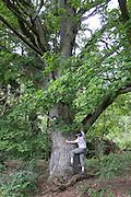 alte Eiche, Naturschutzgebiet Kahle Haardt bei Scheid am Edersee, Nordhessen, Hessen, Deutschland | old oak tree, nature reserve Kahle Haardt near Scheid on Lake Eder, Hesse, Germany