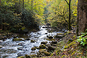 October 11, 2017: A rolling river by the Great Smoky Mountain Institute at Tremont.
